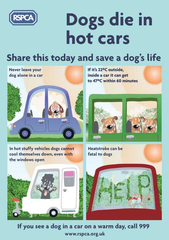 Dogs Die In Hot Cars Uk